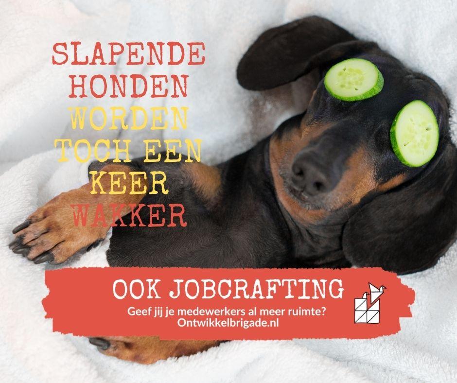 slapende honden worden toch een keer wakker jobcrafting ontwikkelbrigade